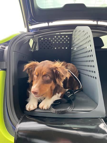 Hundebur Tesla Model Y